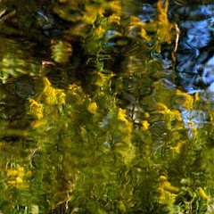 A golden yellow smiles in my wild river! (Denis Collette...!!!) Tags: flowers canada art smile yellow fleurs jaune river painting photography golden photo bravo photographie or peaceful rivire september photograph qubec sourire septembre photographe paisible deniscollette wildriver jaunedor