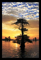 I Stand Alone (SisPau Images) Tags: trees sunset sky orange usa lake reflection tree nature water clouds sunrise canon paul outdoors photography eos dawn landscapes early photo searchthebest dusk framed scenic vivid keith images professional cypress caddo soe 2007 signed naturesfinest blueribbonwinner paulkeith flickrelite excapture copyrightedbypaulrkeithallrightsreservednounauthorizedusageallowed tup2 sispau