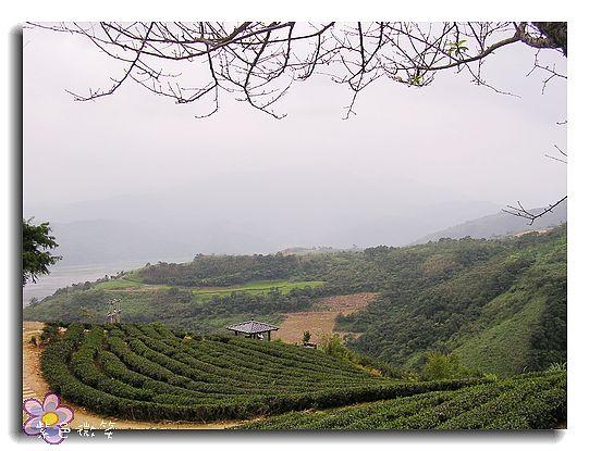 玉蘭茶園2