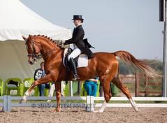 IMG_5511 (White Bear) Tags: horses horse animals russia contest russian equestrian equine artem dressage лошадь фестиваль артем конь кони новый i лошади спорт makeev приз кск век соревнования этап макеев конный выездка