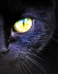 The beast of bodmin moor? (Paul Scott Thomas) Tags: black macro eye cat blackcat catseye cateye macrocat paulscottthomas closeuponcat