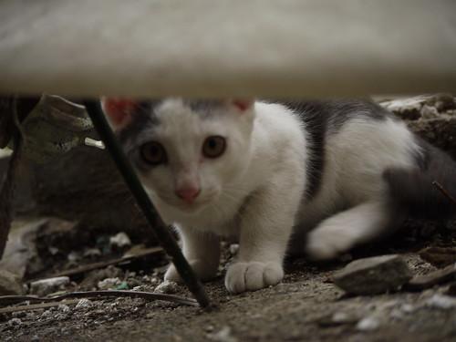 猫@中野区