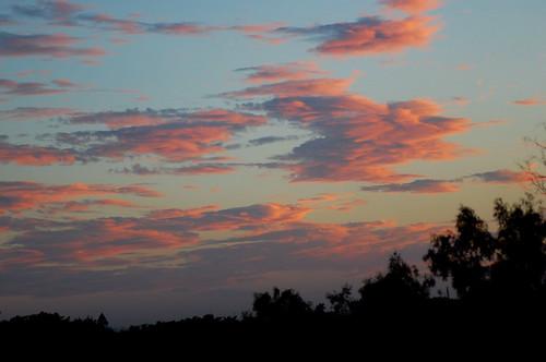 color of skies