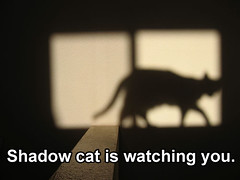 shadow (the1pony) Tags: shadow ethereal sarahc lolcat