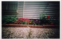 Sidewalk garden (Graustark) Tags: flowers 120 film window texas houston pinhole sidewalk siding agfa 10sec musuemdistrict 6x9pinhole agfacolorportrait160