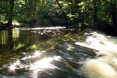 (Lemon2) Tags: park water last sunny flowing bleedin rivlin