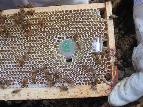 Beekeeping 2440