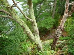 P1030344.jpg (airwaves1) Tags: 1000islands stlawrenceriver july282007 yeoisland