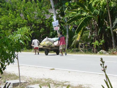 1065505771_03b9f107c1 - Towing Rice in Duero, Bohol - Duero - Bohol