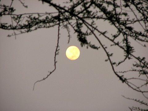 full moon in Lake Manyara