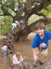 best climbing tree (k!M b) Tags: august treeclimbing