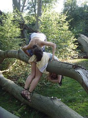 London nature: Epping Forest - caption needed!