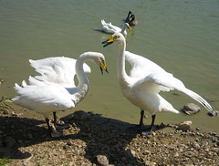 leesburg animal park 8