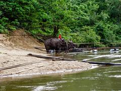 The River Kwai Jungle Rafts, floating hotel (Joerg1975) Tags: water river landscape thailand aqua asia asien wasser minolta tailandia thai asie konica fluss landschaft kanchanaburi      copyrightprotected   revio kd500z kanburi    khwaeyai  kwaeyai   prthetthaj