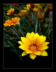 Flower - Flickr (claudio.marcio2) Tags: flower macro colors cores flickr oneofakind flor award elite breathtaking aclass allyouneedislove splendiferous cmeradeourobrasil ultimateshot ultimateshots ithinkthisisart wowiekazowiegroup excellentphotographerawards thenaturegroup heartawardsgroup onlythebestare onlynatureaward coolestphotographers flowerorfoliagedetail wetraveltheworld macromix betterthangood bangladeshphotoclub theperfectphotographers photosdosmileabout naturessgallery