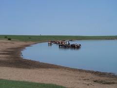 Horses and lake