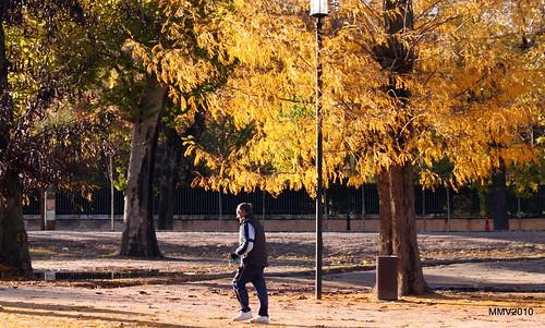 en aranjuez  17-11-2010 17-58-15