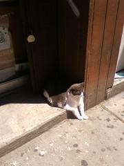 Sunday Afternoon Catblogging
