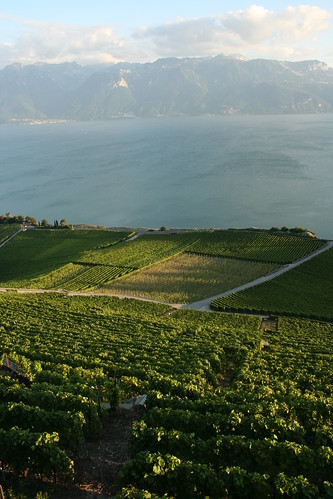 The Vineyards at Lake Geneva