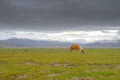 Another World (Luo Shaoyang) Tags: china wallpaper horse nature landscape nikon bravo scenery tibet microsoft    madeinchina    luo  naturesfinest     nikond200   supershot      landscapephotos anawesomeshot aplusphoto ultimateshot luoshaoyang chinageography