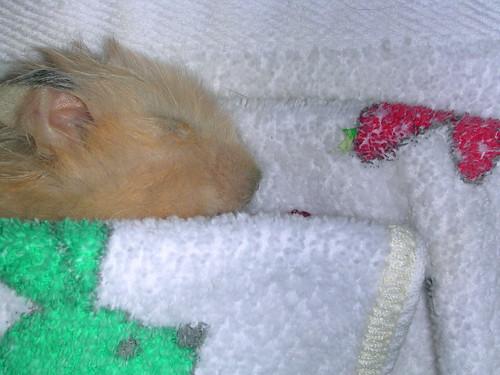 Lucian Sleeping