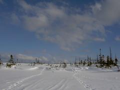 Boreal bog in winter (Boreal) Tags: newfoundland snowshoe bog boreal