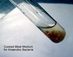 Cooked meat medium for anaerobic bacteria (Albaraa Mehdar) Tags: canon for high student nikon lab media culture slide powershot meat medical resolution medicine medium hd cooked slides microscopic microscope bacteria microbiology faculty colony practical reaction immunology d90 biochemical g10 serology anaerobic practicle albaraa mehdar