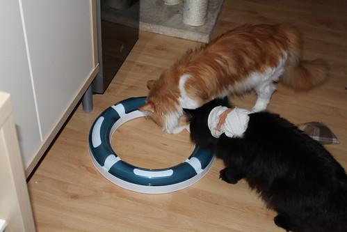 Bebbie und Barnie spielen