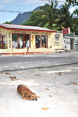 Beau Vallon hot dog (pentlandpirate) Tags: blue sea dog coral relax islands sand paradise turquoise indianocean palm exotic granite tropical seychelles equator mahe ladigue seychellen seychelle