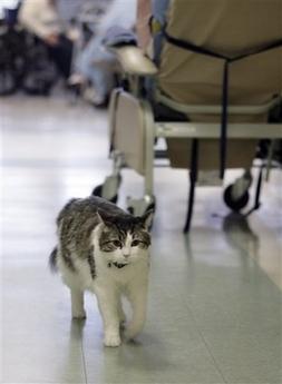 Death Cat