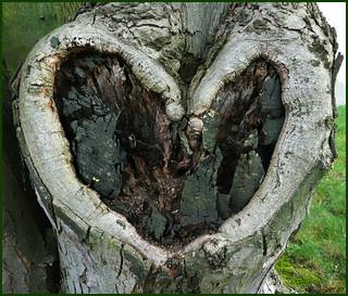 Mein Herz für alle .....