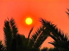 Sunset (Jean-christophe 94) Tags: sunset orange yellow contrast palm jc94 jeanchristophe94
