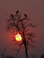 SUNSET (peo pea) Tags: africa sunset bird nature birds canon landscape tramonto mark wildlife uccelli ii sole waterhole animali zambia pozza eos1ds marabu naturalmente supershot wildafrica abigfave colorphotoaward peopea natureselegantshots wwfita thegoldproject