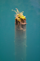 Remains of a Tree (someotherbob) Tags: china lake water turquoise jiu zhai jiuzhaigou gou mywinners abigfave