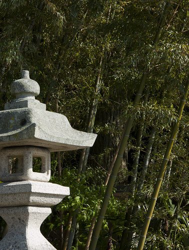 Lantern and Bamboo