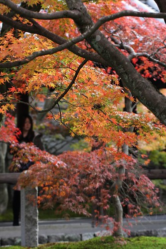 お寺のモミジ,The colored leaves of the temple