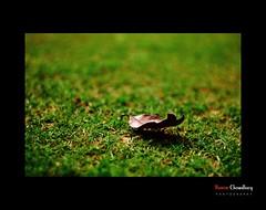 Life still Goes ON and ON (HamimCHOWDHURY  [Active 01 Feb 2016 ]) Tags: blue red black green yellow canon eos is colorful flickr sony everyone dhaka dslr 18200 bangladesh groups dhanmondi photogaphy hamim 60d 595036 framebangladesh aximpur 518117112010