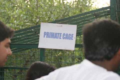 The primate cage in the PfA shelter
