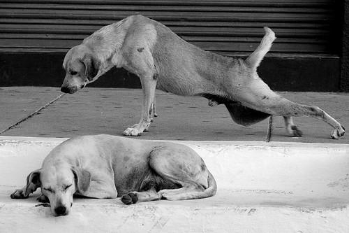 Cachorros Sao Os Amigos