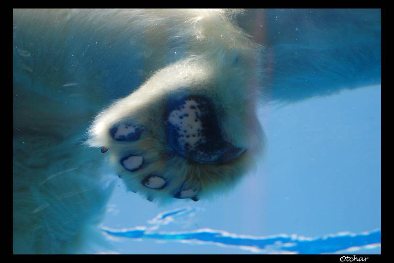 bottom of polar bear's foot