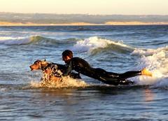 Gotch You !! (antonioVi (Antonio Vidigal)) Tags: sea playing portugal canon 350d gimp weimaraner fontedatelha sigma18200 supershot pedrovidigal estai antoniovidigal antoniovi