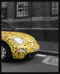 Leopard Bug prowling in the Urban Jungle (Jules in Sydney) Tags: beautiful vw bug beetle cheetah urbanjungle volkswagon vdub interestingness88 i500 beautifulcapture aplusphoto wowiekazowie