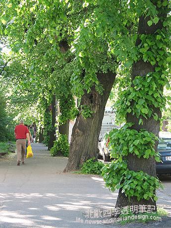 tree skirt 6