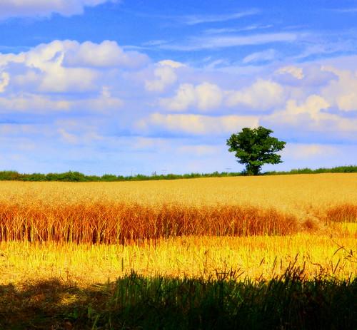 Harvest Season por aremac.