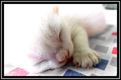 sleeping kitten (avimalya) Tags: baby cute cat star focus kitten babies shot sweet sleep super exquisite depth natures selectivecoloring aplusphoto superhearts platinumheartaward