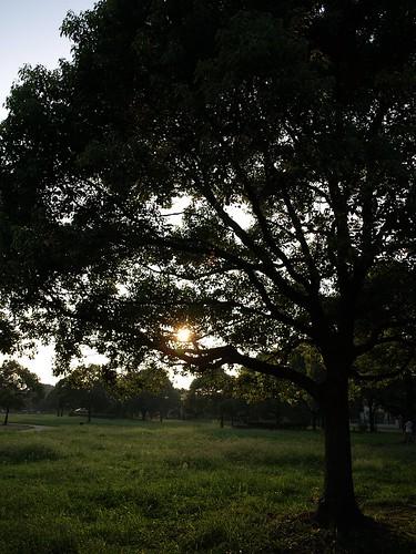 夕暮れの岩槻城址公園