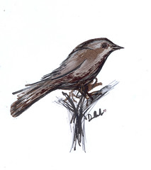 Nightingale (Dan Morelle) Tags: bird art moleskine nature japan sepia illustration pen pencil notebook sketch map drawing journal avesemportugal sketchbook brush dessin soe 60 brushpen encre beira nightingale moleskinerie pentel dessiner lusciniamegarhynchos nachtegaal commonnightingale pentest nachtigall artlibre shieldofexcellence joaquimantunes ruiseorcomn rossignolphilomle etelnsatakieli danmorelle