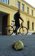Dead bird (morten almqvist) Tags: bird dead sonyericsson w810
