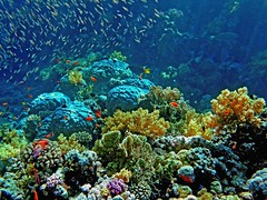 Coral Garden (Z Eduardo...) Tags: fish colors underwater redsea egypt sinai sharmelsheik coralreef abigfave superaplus aplusphoto superbmasterpiece superhearts