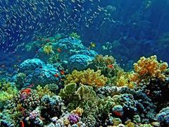 1423816665 5caa5d1a8e m Delicate Coral Reefs